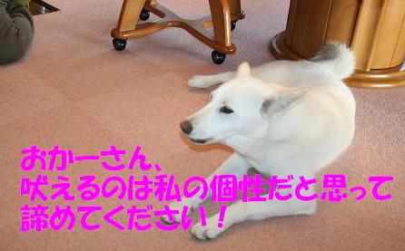 f0121712_1521977.jpg
