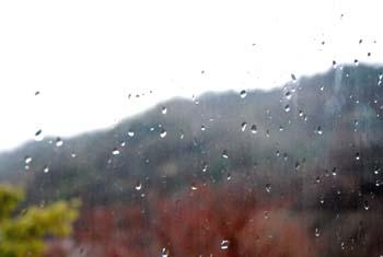 春の雨_e0103024_1648949.jpg