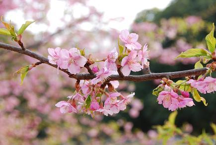 お花見&カフェトレーニング_c0099133_8493753.jpg
