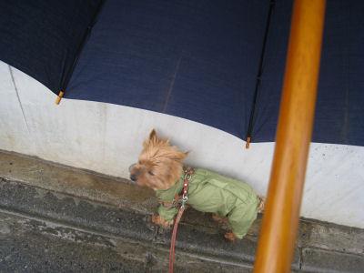 """ママは傘で濡れ無い様に~"""""""