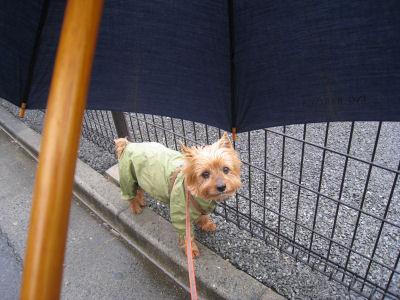 """僕、この傘が怖いよ^^;"""""""