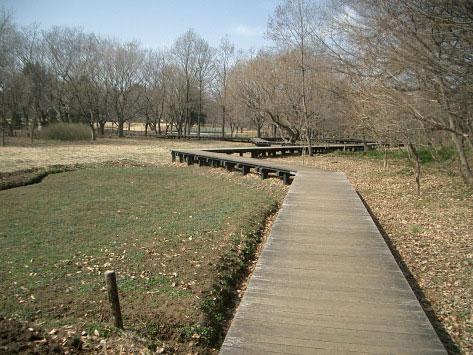 野川公園自然観察園、3月9日。_e0064461_10264396.jpg