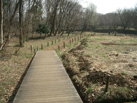 野川公園自然観察園、3月9日。_e0064461_10265888.jpg