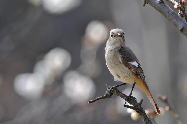 梅と鳥さん_f0053272_12491242.jpg