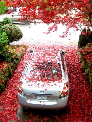 バンクーバー雨と紅葉の季節になりました。_d0129786_1719221.jpg