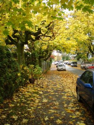 バンクーバー雨と紅葉の季節になりました。_d0129786_175316.jpg