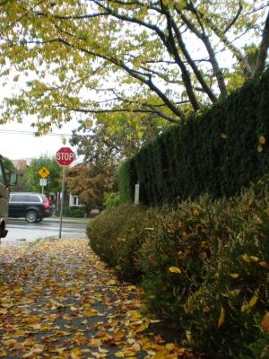 バンクーバー雨と紅葉の季節になりました。_d0129786_1763545.jpg