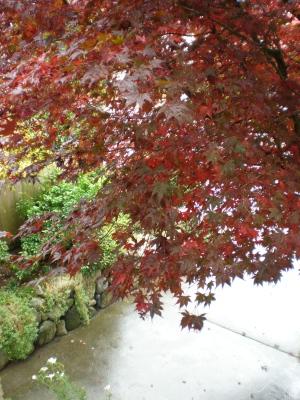 バンクーバー雨と紅葉の季節になりました。_d0129786_1794898.jpg