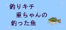 d0067906_19565052.jpg