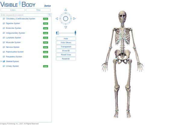 自由自在にコントロールできる3D人体模型_c0025115_2020105.jpg