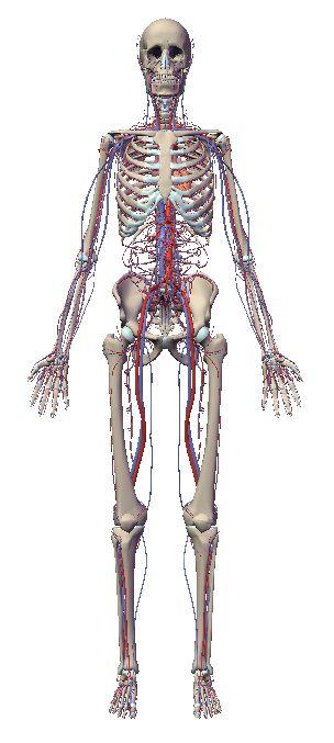 自由自在にコントロールできる3D人体模型_c0025115_20225141.jpg