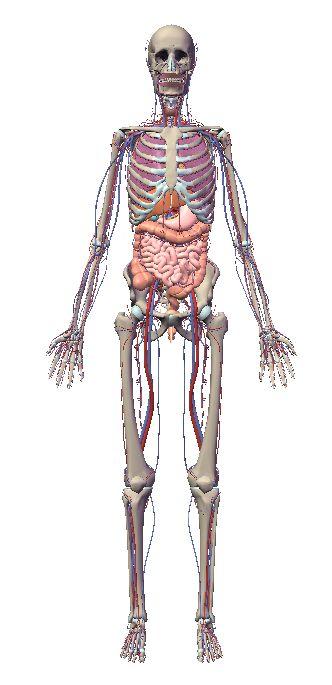 自由自在にコントロールできる3D人体模型_c0025115_20245045.jpg