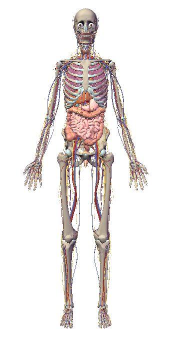 自由自在にコントロールできる3D人体模型_c0025115_20255757.jpg