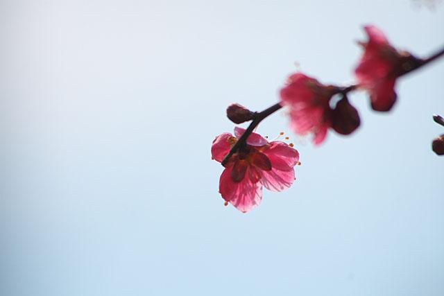 春の夢_c0067040_23252724.jpg