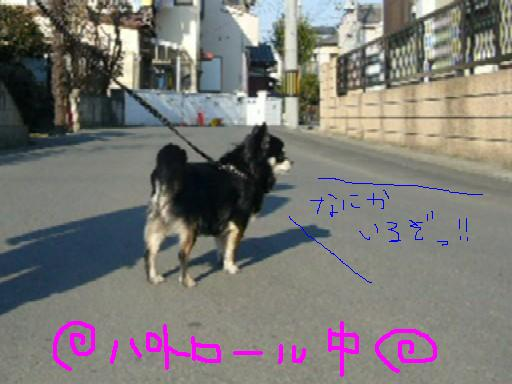 c0121141_2322998.jpg