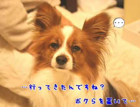 d0013149_119459.jpg
