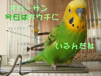 b0082757_11275421.jpg