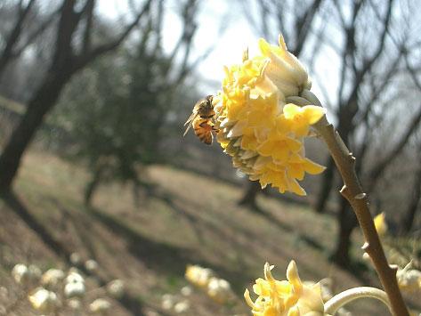 野川公園自然観察園、春の花々_e0064461_225553.jpg