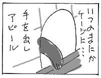 ぼんたん2&のせかぶ新隊員&お知らせ_a0064067_245472.jpg