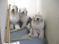 週末の犬のコーナー 08/03_f0072767_1930319.jpg