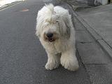 週末の犬のコーナー 08/03_f0072767_193401.jpg