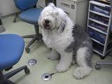 週末の犬のコーナー 08/03_f0072767_1935859.jpg