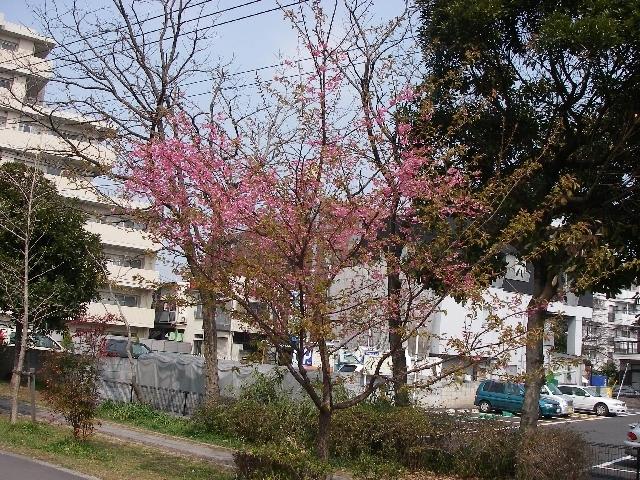 桜が咲いているぞ_a0074069_14483811.jpg
