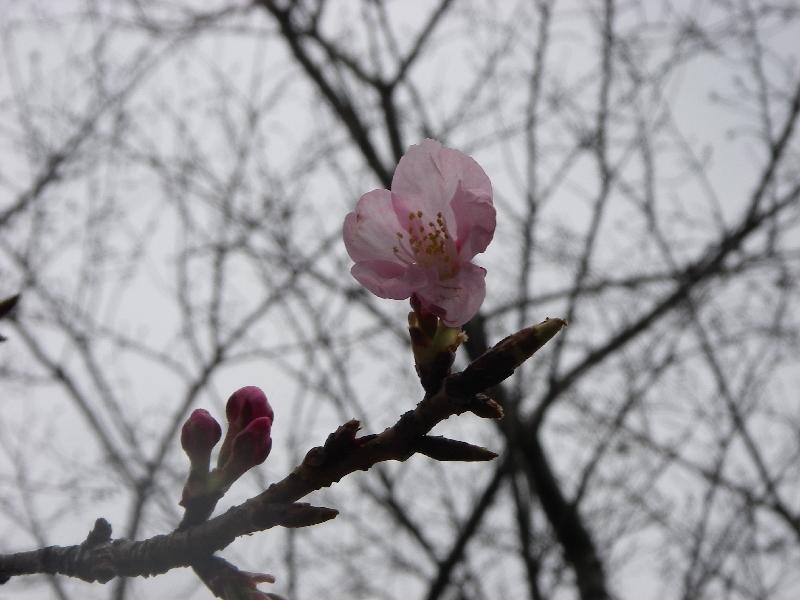 桜が咲いているぞ_a0074069_14542728.jpg