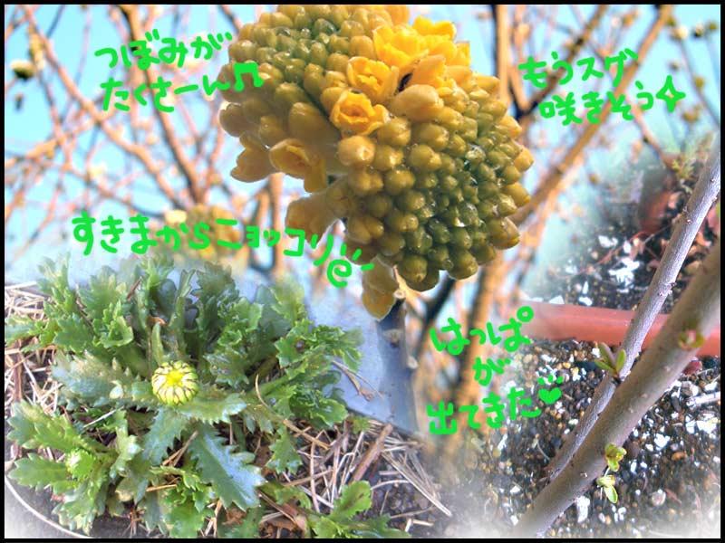 春やね〜♪♪♪_f0119369_15104438.jpg