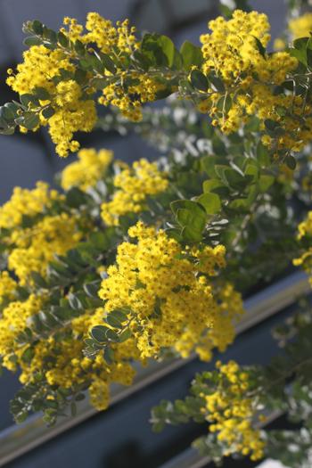春うらら・・・♪_f0127281_11233797.jpg