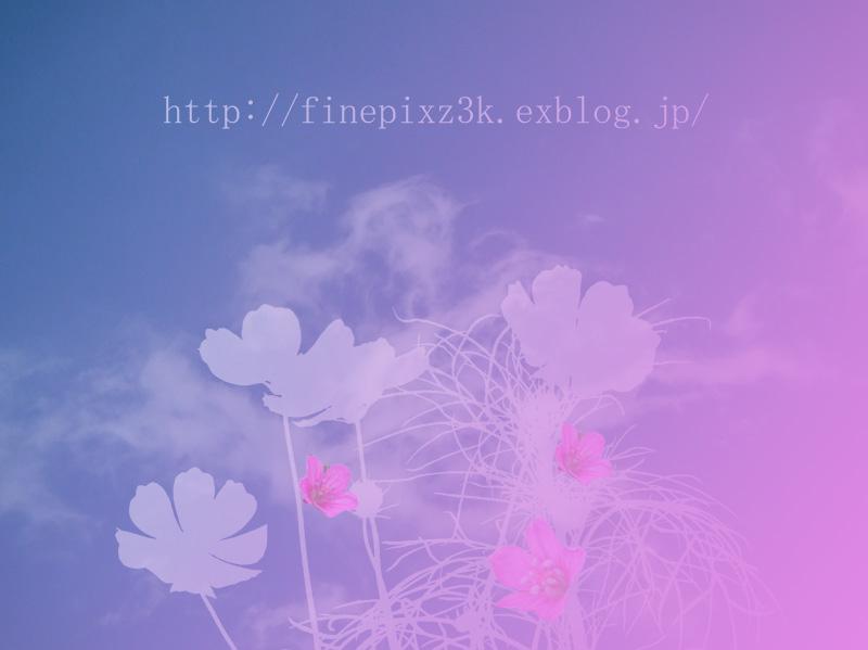 d0127711_21218100.jpg