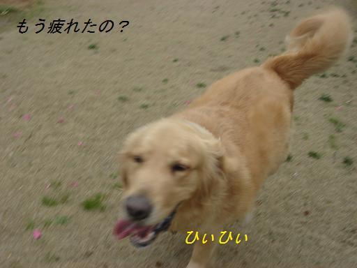 f0114128_17584577.jpg