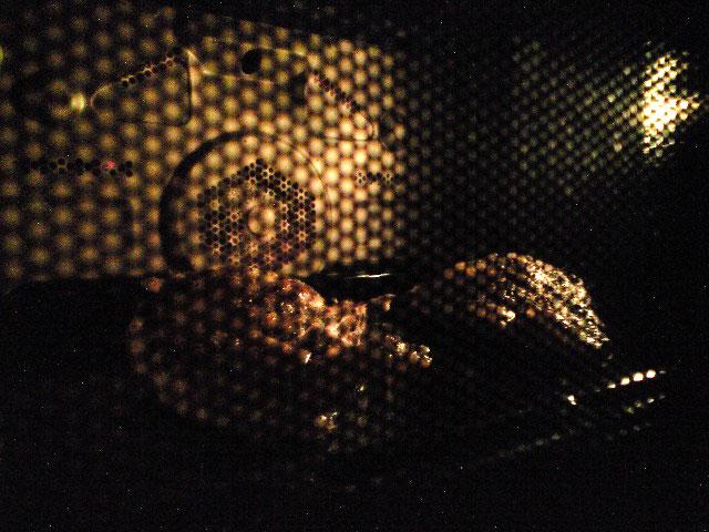 野鴨のロースト バルサミコソース_a0016730_18412046.jpg