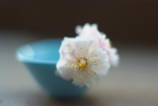 家の庭に春がおりてきた_f0050534_16262979.jpg