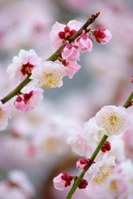 春が降る_f0050534_17175668.jpg