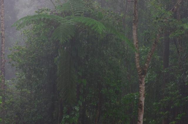 雨の撮影 K20D撮りおろし_f0050534_17533389.jpg