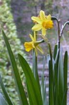 春が来た〜♪_a0052863_246440.jpg
