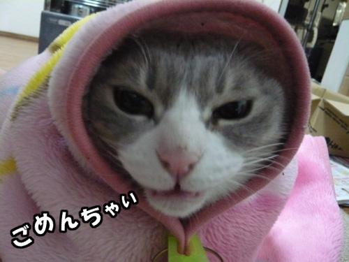 すきんいぢり_b0083267_19483799.jpg