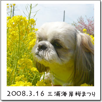 b0024183_1965878.jpg