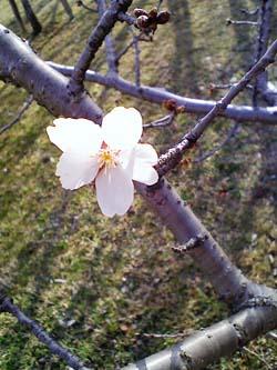 春の公園_a0049695_22164783.jpg