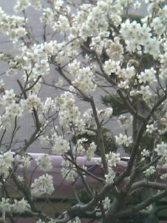 春ですね~_c0119937_2324428.jpg