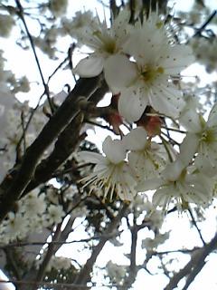 春ですね~_c0119937_2333567.jpg