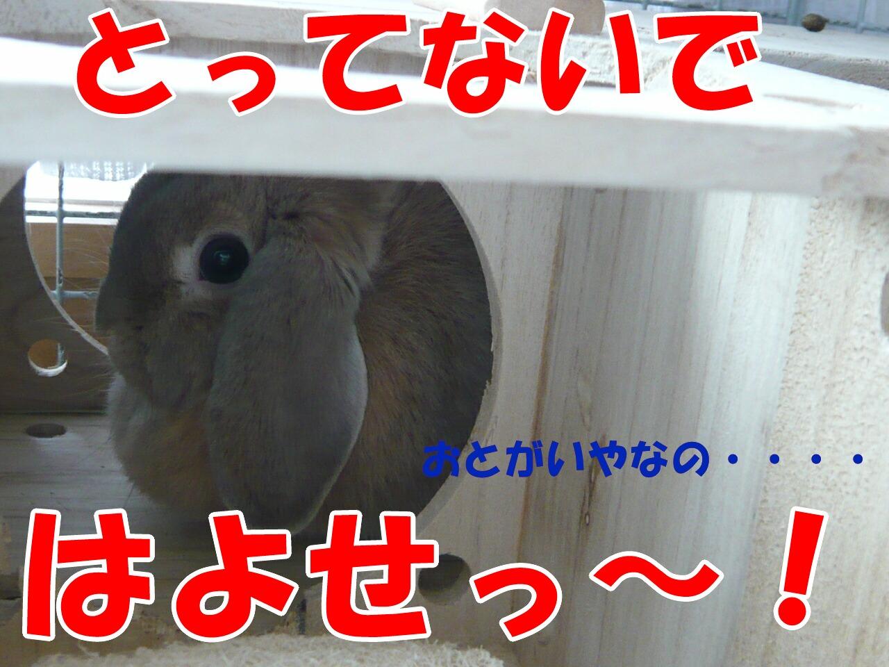 c0151439_9281110.jpg