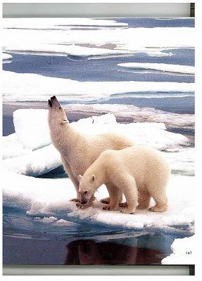北極のシロクマ_f0059988_8345795.jpg