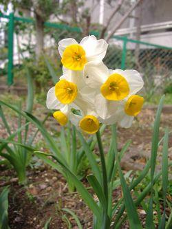 庭の花々_e0143294_16114635.jpg