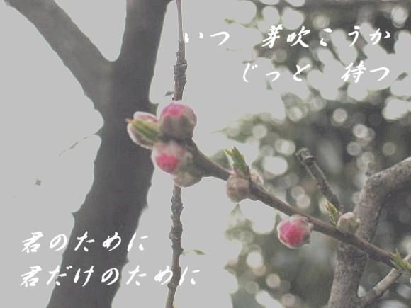 f0156895_16413727.jpg