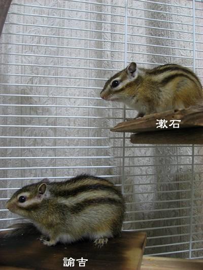諭吉と漱石