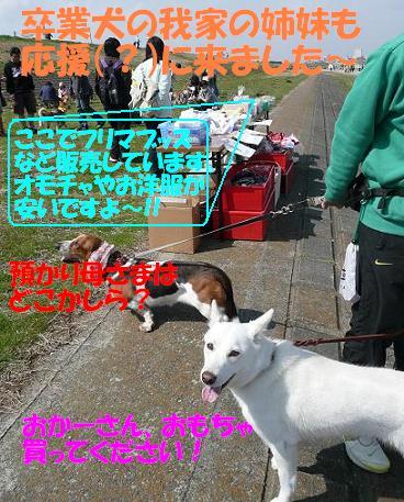 f0121712_17511192.jpg