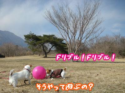 f0129214_1005098.jpg