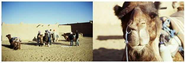 うっちーモロッコ旅行記Vol.4~サハラ砂漠編Ⅱ~ _a0104621_15125878.jpg